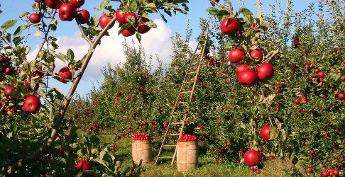 Lazy weekend poll ~ open thread, Johnny Appleseed Day 2020