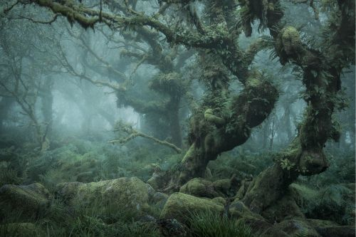 Discover the «Mystical» side of the Woodland, by Neil Burnell